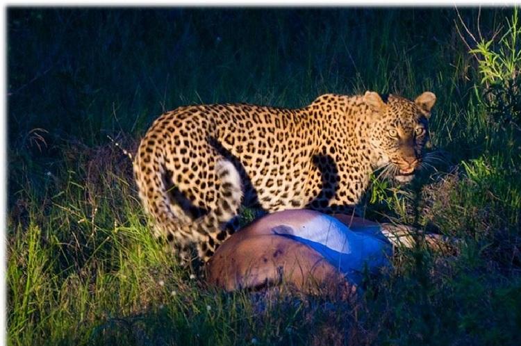 RPA Kruger Park